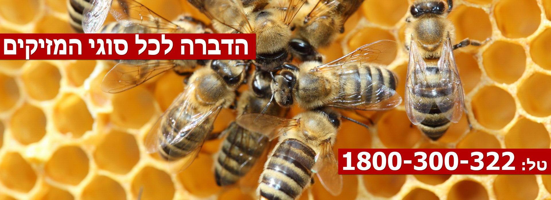 Pest-Control-Haifa-Slider1