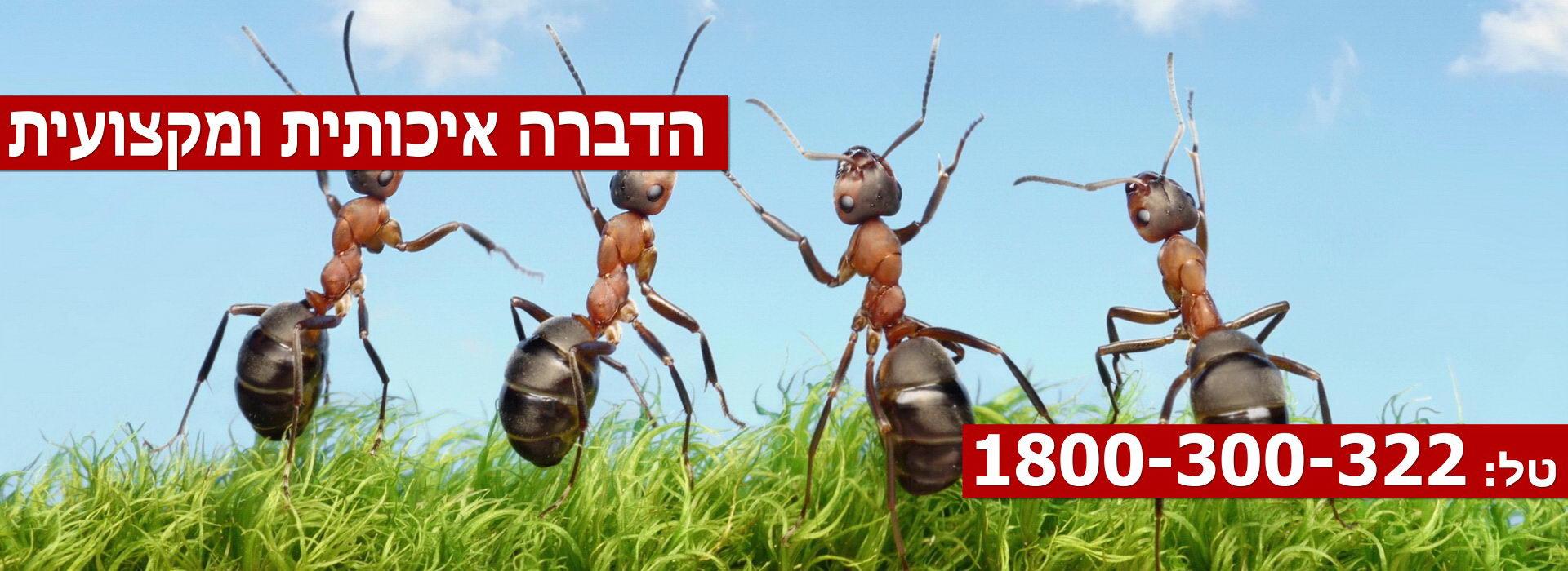Pest-Control-Haifa-Slider2