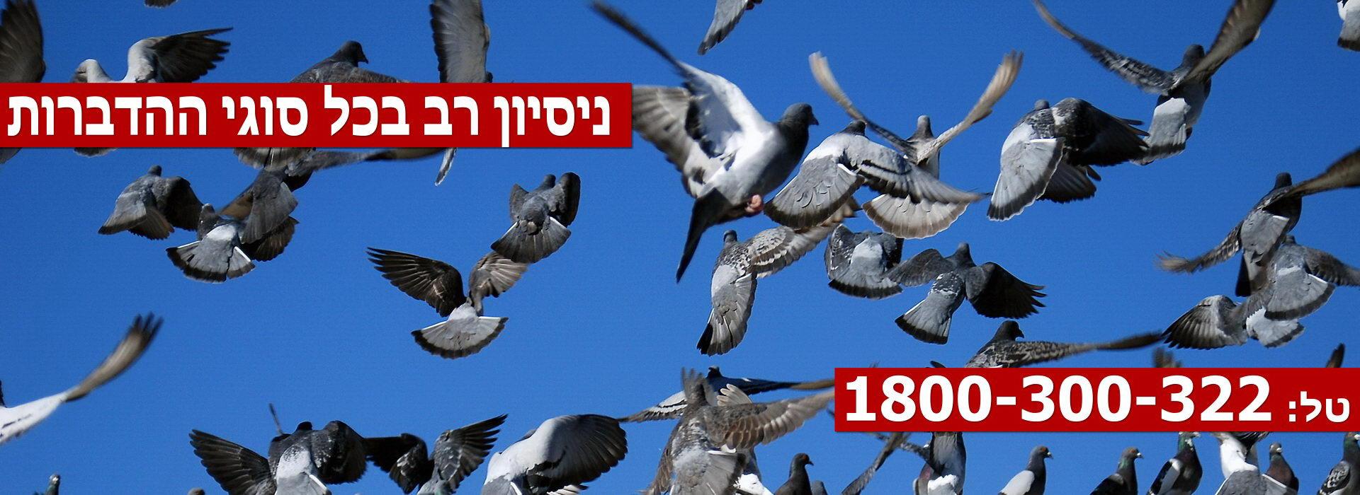 Pest-Control-Haifa-Slider3