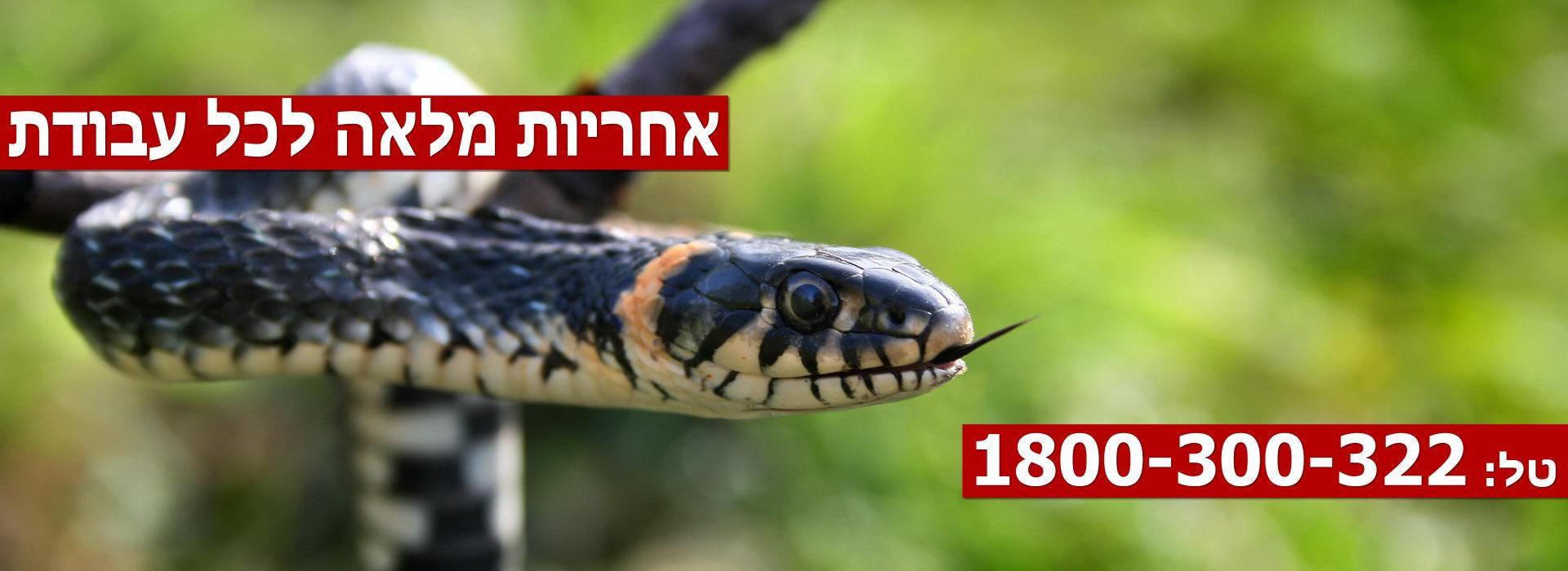 Pest-Control-Haifa-Slider5