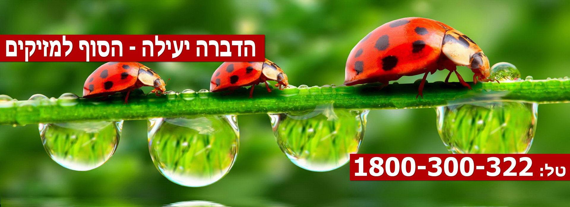 Pest-Control-Haifa-Slider6
